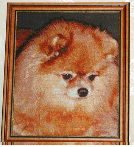 Вышивка портрета по фото домашнего любимца