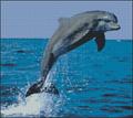 Вышивка крестом Дельфин