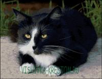 Вышивка крестом Кот