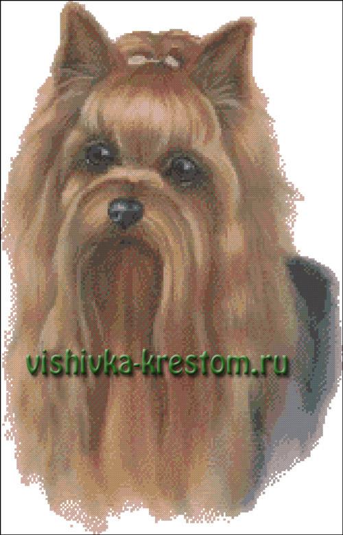 Форум zverushki.tomsk.ru